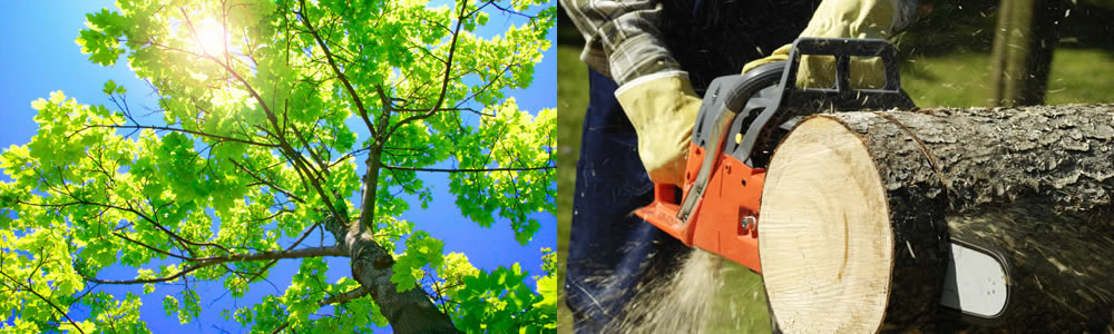 Tree Services Parrish